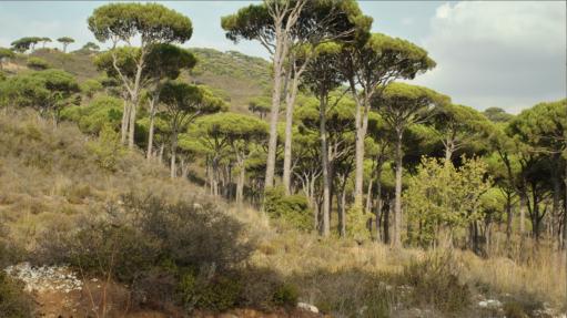 Hammana La Martine Valley, Deir El Harf 2034, Libanon